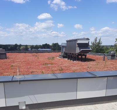 dach w okresie letnim